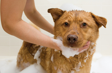 3705-stepping-up-pet-wash-sales.jpg