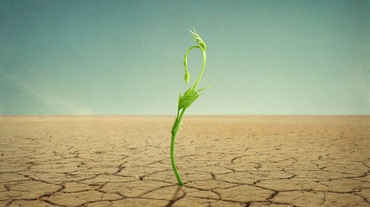 Growth in drought