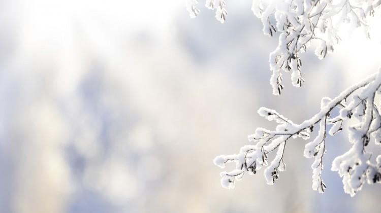 Winter, snow, cold, snowy