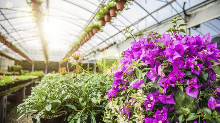 Greenhouse, plants, garden, flowers, flower, green house, gardening