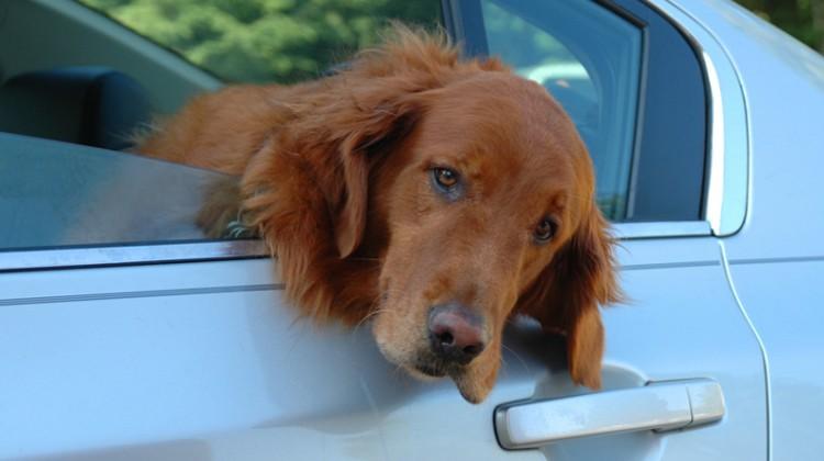 Pet, pet wash, pet hair, dog wash, additional profit center, detailing, detail.