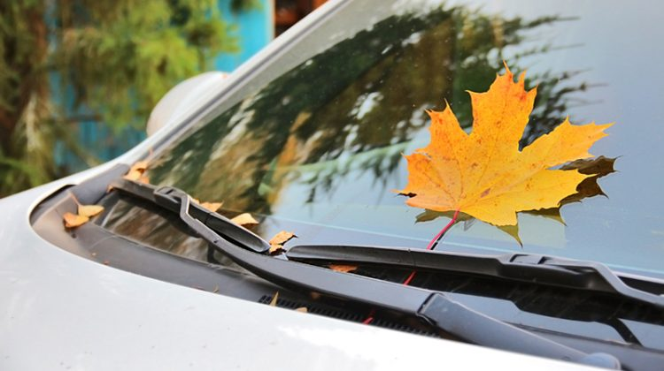 fall, car, leaf, changing colors, autumn, windshield, leaves on windshield