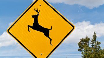 deer crossing, deer, deer crossing sign, trees