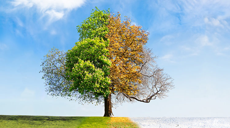 seasons, weather, tree, spring, summer, fall, autumn, winter