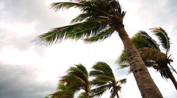 hurricane, storm, wind, palm trees
