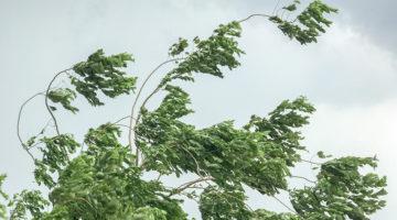 tree, high winds, cloudy sky, storm