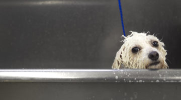 dog, pet washes, pet wash, wet, water, soap