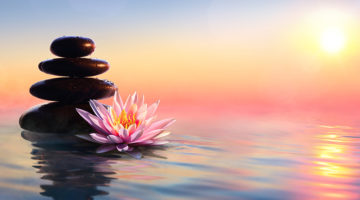 zen, lotus, rocks, water