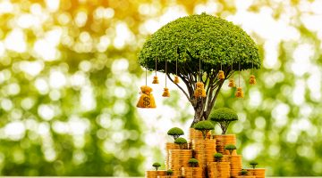 money, tree, investment, private equity